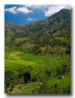 Bali Rice Fields - Photo Copyright Jeff Mullins 2010